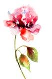 Beautiful Peony flower Royalty Free Stock Photos
