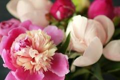 Beautiful peony flowers, closeup. Beautiful peony flowers, close up Royalty Free Stock Images