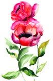 Beautiful Peony flowers Stock Photos