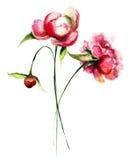 Beautiful Peony flowers Royalty Free Stock Photo