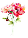 Beautiful Peony flowers. Watercolor painting Royalty Free Stock Images