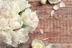 Beautiful peony flowers on wooden background. Closeup Stock Images