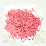 Beautiful peony greeting card design Stock Photo
