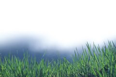 Beautiful and perfect green background by the fresh grass. Stock Photography