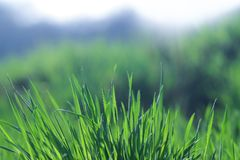 Beautiful and perfect green background by the fresh grass. Stock Photos