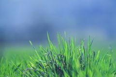 Beautiful and perfect green background by the fresh grass. Stock Photo