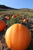 Beautiful perfect pumpkin patch- front cover of magazine Stock Images