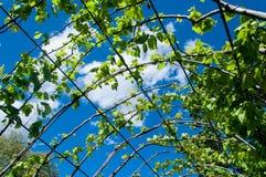 Beautiful pergola in the garden Royalty Free Stock Photos
