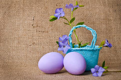 Beautiful periwinkles in basket with easter eggs Royalty Free Stock Photography