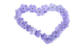 Beautiful periwinkles in a shape of heart Stock Image