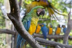 Beautiful Pet Parrot Stock Photos