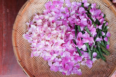 Beautiful petal of orchid flowers petal orchid Royalty Free Stock Images