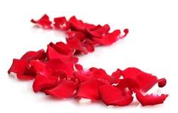 Beautiful petals of red roses Royalty Free Stock Photos