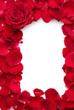 Beautiful petals of red roses and rose royalty free stock images