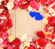 Beautiful petals of roses Stock Images