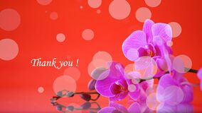 Beautiful Phalaenopsis orchid flowers. On red background stock footage