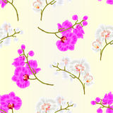 Beautiful  Phalaenopsis Orchid Yellow stem with flowers and  buds   vintage  vector Stock Image