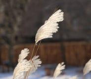 Beautiful photo of fluffy plant Stock Photos