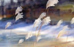 Beautiful photo of fluffy plant royalty free stock image