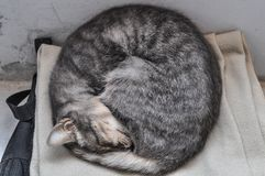 Beautiful photo of a sleeping cat placidly screwed. Beautiful photo of a small cat sleeping peacefully coiled, on a carpet on the floor royalty free stock photo