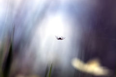 Beautiful photo of a small spider. Royalty Free Stock Photography