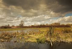 Beautiful photo of spring flood waters of the river Royalty Free Stock Photography