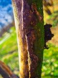 Beautiful photo of tree. Amazing photo of tree bark Royalty Free Stock Photos