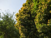 A beautiful photo of a tree green and yellow leaves. Taken on a sunny spring day stock photos