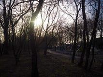 Beautiful photo of trees. Amazing photo of trees with sunshine next to playground Vector Illustration