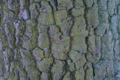 Bark of a large tree close up stock images
