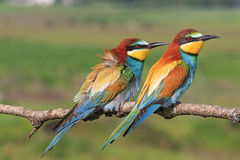 Beautiful picture with colorful birds Royalty Free Stock Images