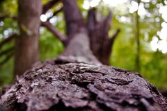 Nature. Beautiful picture of a fallen tree in Michigan woods with beautiful foreground blur Stock Photos