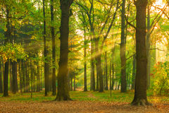 Beautiful picture of the forest at dawn Stock Images