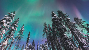 Beautiful picture of massive multicolored green vibrant Aurora Borealis, Northern Lights Royalty Free Stock Photo
