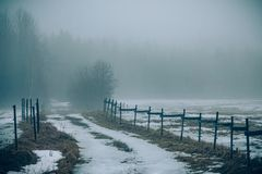 Beautiful picture on an old foggy forest road royalty free stock image