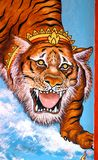 Beautiful picture of a tiger Royalty Free Stock Photo