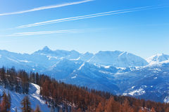 Beautiful picture of winter mountain scene. With thick forest in the foreground Royalty Free Stock Photo