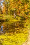 Autumn forest reflection landscape. Forest and a pond. royalty free stock images