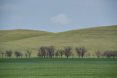 Beautiful picturesque spring landscape with green steppe Stock Photo
