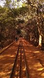 Railway track inside the forest royalty free stock photo
