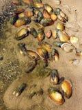 Beautiful pied shells on sand , Lithuania stock photo