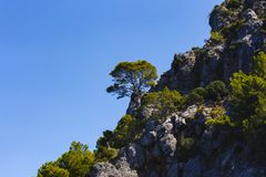 A beautiful pine on a cliff Royalty Free Stock Photo