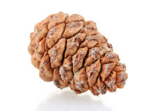 Beautiful pine cone Royalty Free Stock Photos