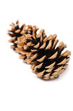 Beautiful pine cone isolated on white Royalty Free Stock Image