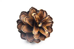 Beautiful pine cone isolated on white Royalty Free Stock Images