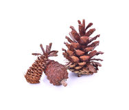 Beautiful pine cone isolated on white background Royalty Free Stock Images