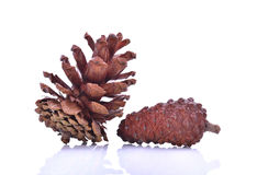 Beautiful pine cone isolated on white background Stock Images