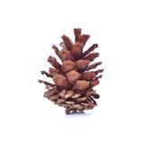 Beautiful pine cone isolated on white background Stock Image