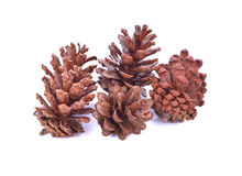 Beautiful pine cone isolated on white background Royalty Free Stock Photos