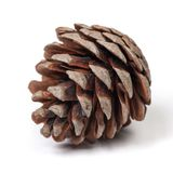 Beautiful pine cone. Isolated on white background close up Royalty Free Stock Photography